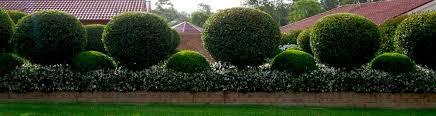 cura giardino potatura siepi a parma e provicnia manutenzione e cura di