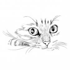 cats vectors photos and psd files free download