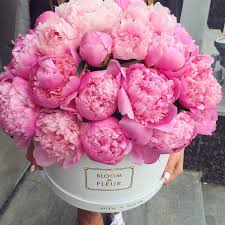 peony flowers look at these peonies just look flowers peony
