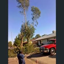 mike macchiaroli tree company 13 photos 35 reviews tree