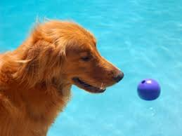 Where To Put A Pool In Your Backyard Swimming Pools In Your Backyard Safety And Your Pet Vetwest
