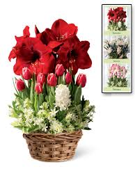monthly flower delivery monthly flower delivery 3 months of blooms living bouquets