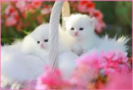 wallpaper cat whatsapp cute cats dogs wallpapers images free download for desktop background