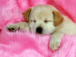 cute backgrounds for computers ideas about cute puppy puppies backgrounds and wallpapers of high