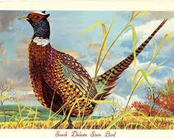state bird of south dakota state bird postcards etsy