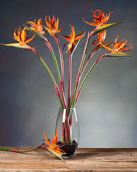 birds of paradise flowers silk birds of paradise stems for casual decorating at petals
