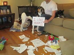 bluetick coonhound song 16 best best dogs ever images on pinterest hound dog animals