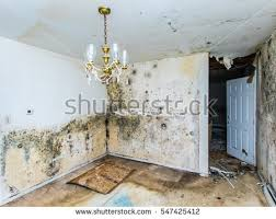 Mould Bedroom Ceiling Mold Stock Images Royalty Free Images U0026 Vectors Shutterstock