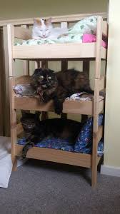 Cat Bunk Bed My Built My S Cats Bunk Beds And They Actually Use
