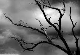 bder in grau scinexx depressive sehen wirklich grau in grau netzhautzellen