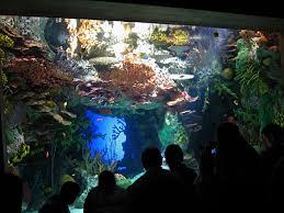Georgia Aquarium Floor Plan The New Georgia Aquarium