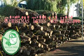 christmas trees san diego here now at mission hills nursery