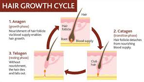 growing out pubic hair 7 ways to grow a beard faster and stimulate facial hair growth