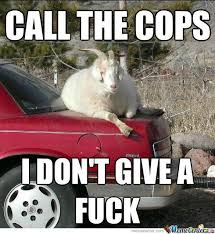Fuck The Police Meme - call the cops i don t give a fuck cops memes funny pinterest memes