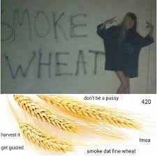 Funny Memes About Weed - dank wheat memes memebase funny memes