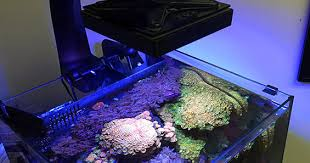 led aquarium lights for reef tanks do s don ts with led aquarium lights
