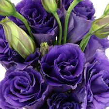 lisianthus flower of purple lisianthus flower for june to september delivery
