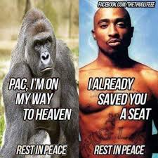 Tupac Memes - tupac welcoming harambe with open arms harambe the gorilla know