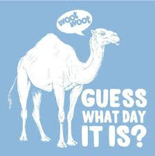 Hump Day Camel Meme - happy hump day the notorious d o u g
