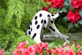 dalmatian garden ornament digging in shrubbery june stock photo