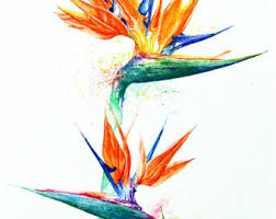 pink lotus flower abstract pen work floral design