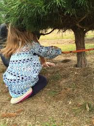 christmas tree farms open to eager customers houston chronicle