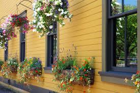 refresh your hanging baskets wedel u0027s nursery florist and garden