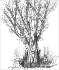 easy tree sketches