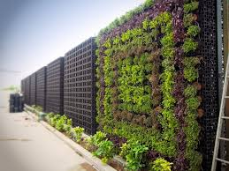 vertical gardening systems australia home outdoor decoration