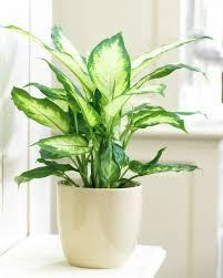 Low Light Outdoor Plants Perfect For Office Plantas Pinterest Plants Houseplants