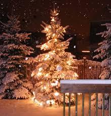 eco friendly christmas tree choices