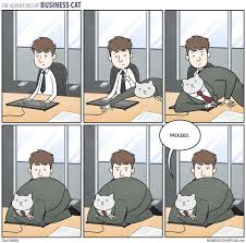 Business Cat Memes - business cat meme by sachat31 memedroid