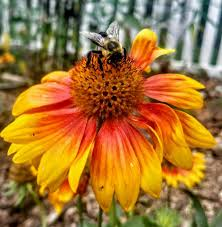 doc u0027s healing hives and honey foundation home facebook