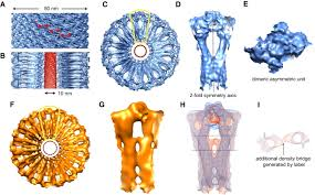 structure of a bacterial dynamin like protein lipid tube provides