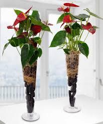 indoor flowering plants anthurium plant tropical plants u2013 beneva flowers u2013 sarasota u2013 fl