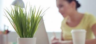 plantes bureau plantes vertes mini jardins d intérieur des solutions antistress