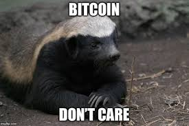 Honey Badger Memes - honey badger memes imgflip