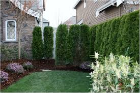 backyards wonderful astonishing privacy trees for small