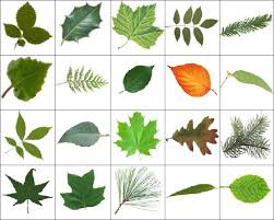 9 best 9 different types u0026 kinds of trees u0026 leaves images on