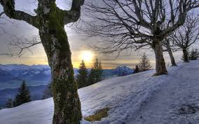 sunrise snow woods amazing sunlight sunset peaceful beauty lovely