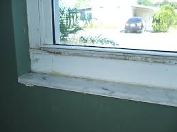 the dangers of mold in your home