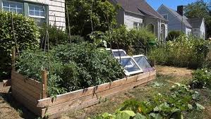 how to start a vegetable garden mnn mother nature network