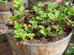 Indoor Vegetable Container Gardening - best 25 container vegetable gardening ideas on pinterest