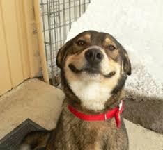 Dog Cooking Meme - good dog greg know your meme