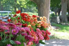 12 tips for growing cutting flowers from barberry hill farm