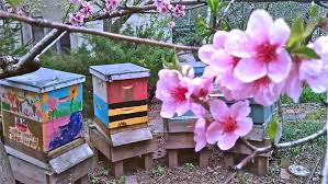 green oasis garden bees raising teeny tiny livestock in nyc page 6