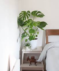 best plants for bedroom plants for bedroom air purifying bathroom best low light