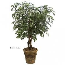5 foot outdoor artificial ficus tree with trunks w 0157