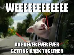 Shaved Guinea Pig Meme - are never ever ever getting back together funny pig meme image