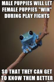 Fact Frog Meme - image 679213 small fact frog know your meme